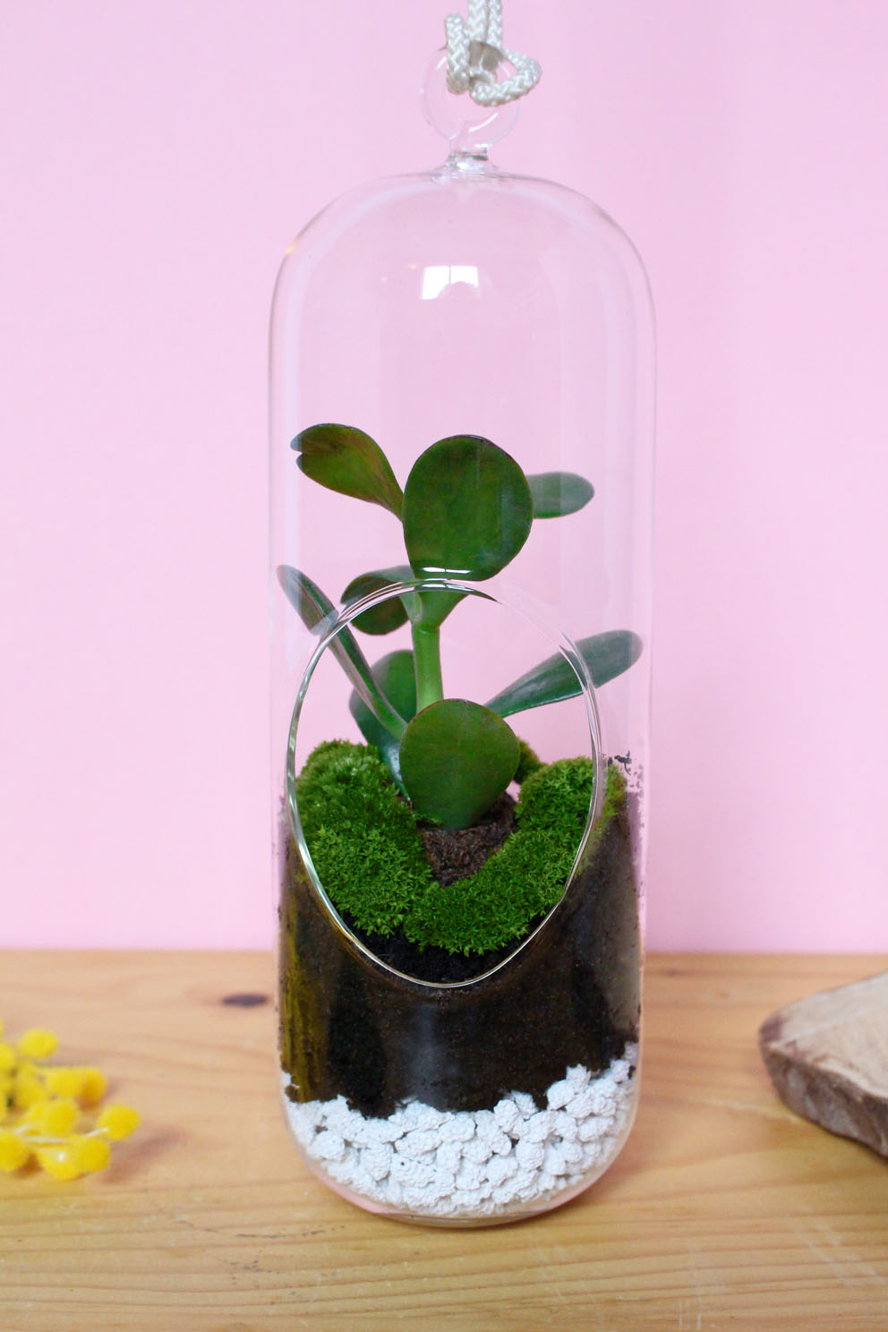How To Make A Terrarium Easy Diy Terrarium Decor Celine Lunakim