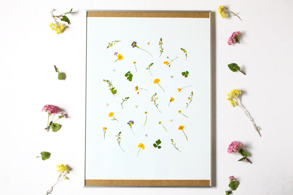 Pressed flowers frame diy home decor idea with flowers cline lunakim pressed flowers frame xxl solutioingenieria Images