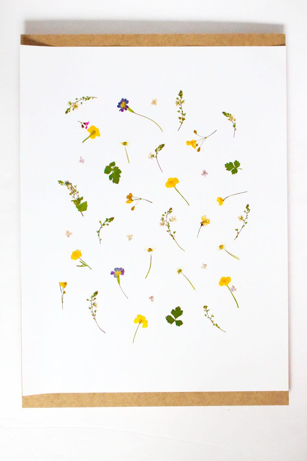 Pressed Flowers Frame Diy Home Decor Idea With Flowers Cline Lunakim