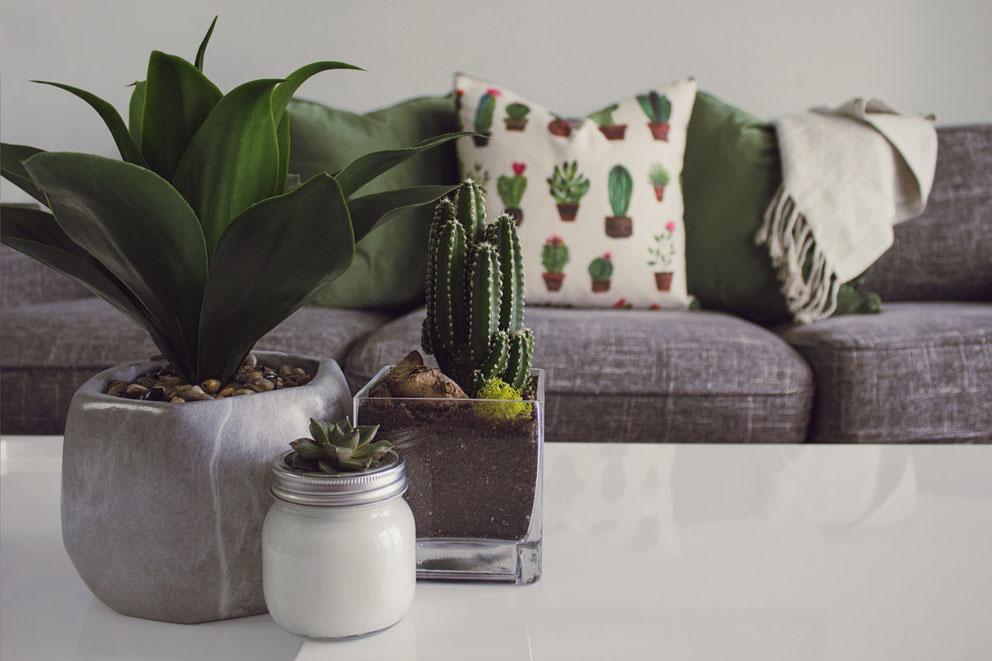 Astuces et idées pour décorer votre intérieur avec des plantes